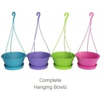 Pot Plant - 25cm Hanging Bowl Comp Purple